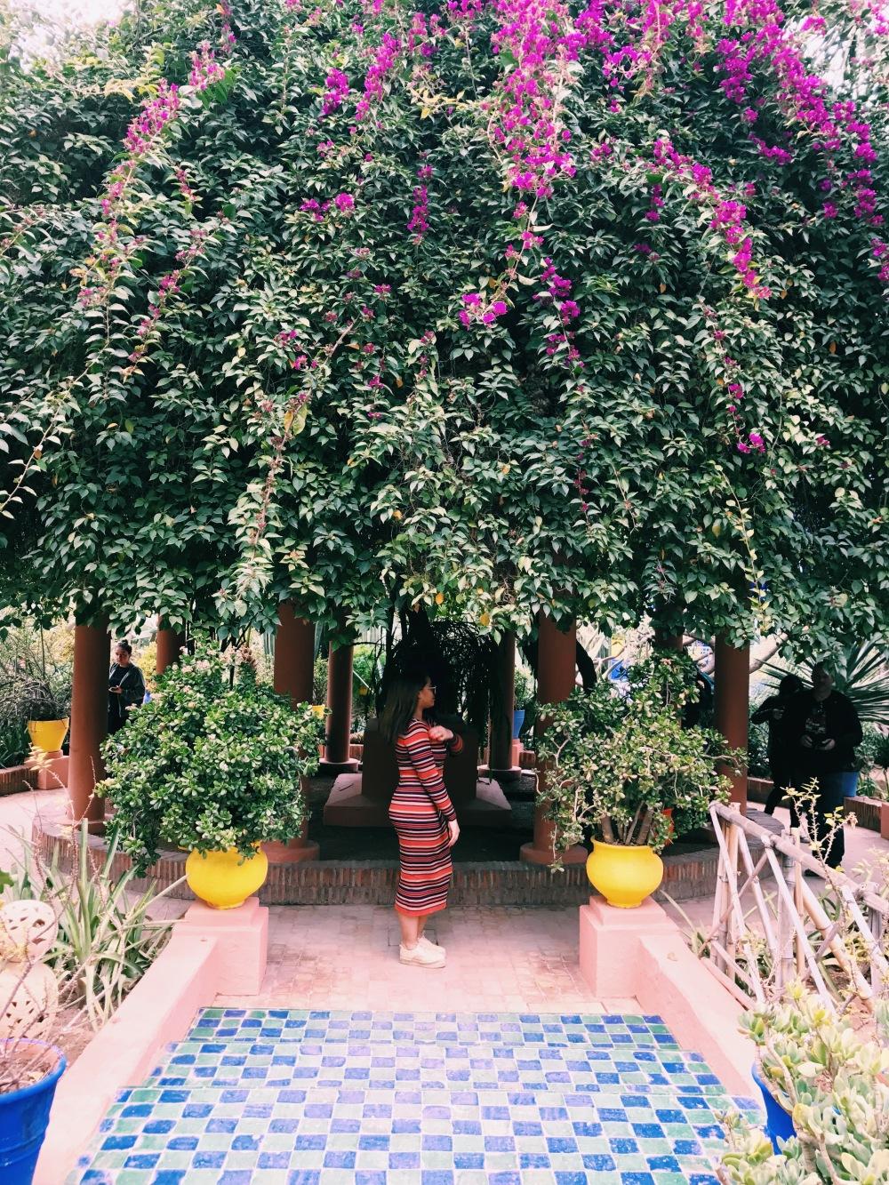 Jardin Majorelle - Marrakech - stripes - cicionline