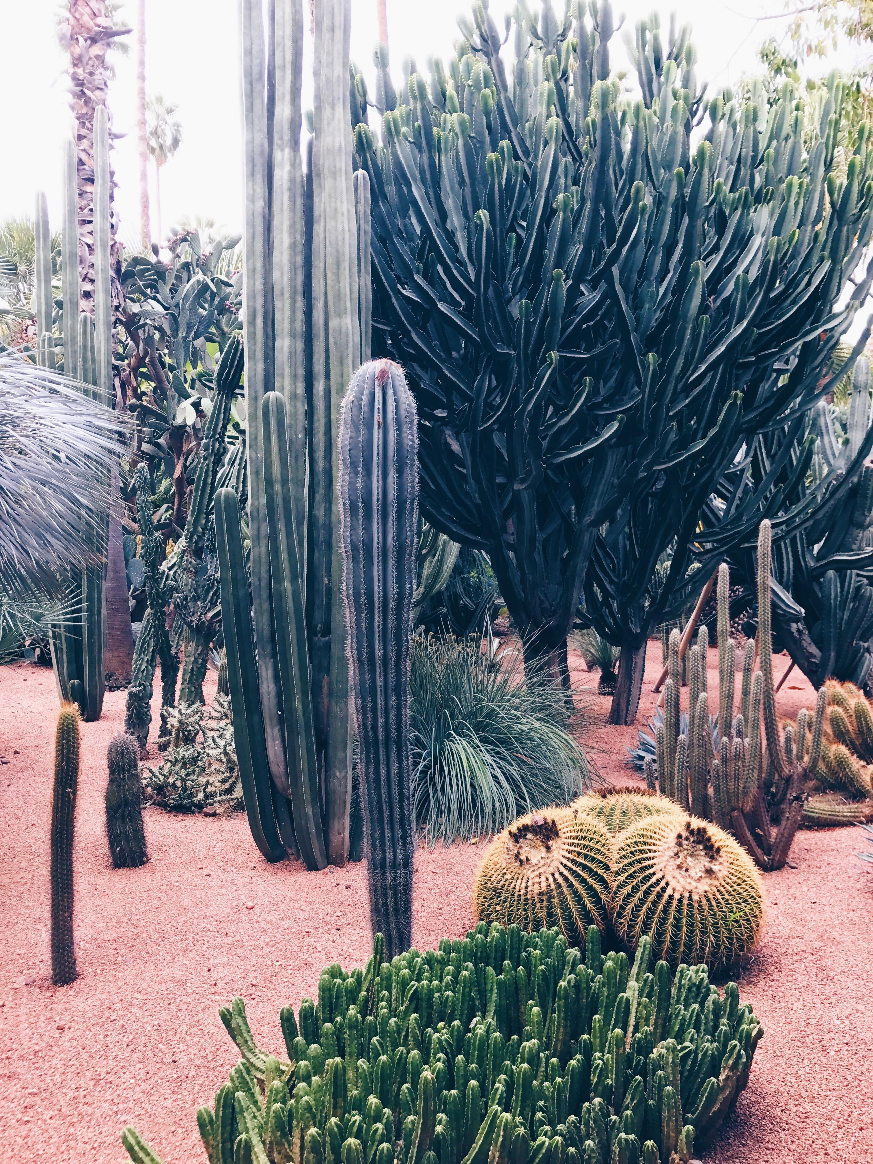 Jardin Majorelle - Marrakech - green - cactus - plants