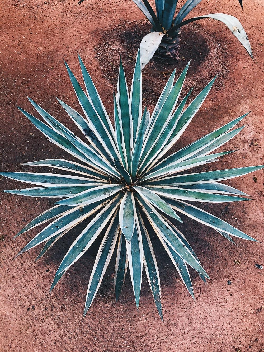 ardin Majorelle - Marrakech - green - cactus - plants